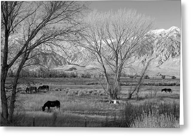 Grazing Snow Greeting Cards - Horse Grazing In A California Meadow Greeting Card by Mountain Dreams