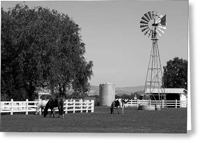 California Agriculture Greeting Cards - Horses On A California Farm Greeting Card by Mountain Dreams