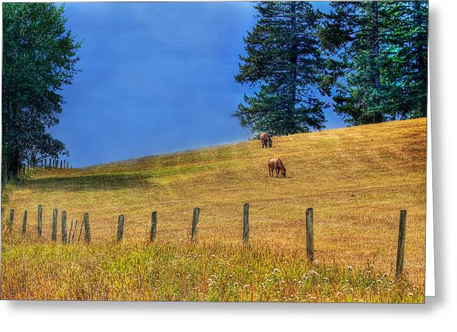 Ranch Greeting Cards - Horses on the Hill Greeting Card by Naman Imagery