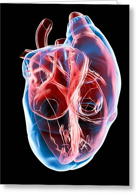 Biomedical Illustrations Greeting Cards - Human Heart, Artwork Greeting Card by Roger Harris