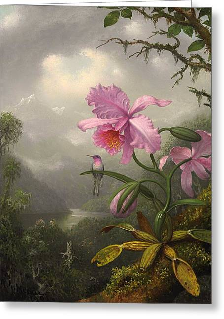 Mountain Valley Greeting Cards - Hummingbird Perched On The Orchid Plant Greeting Card by Martin Johnson Heade
