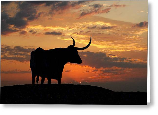 Rodeo Photographs Greeting Cards - Into The Sunset Greeting Card by Robert Anschutz