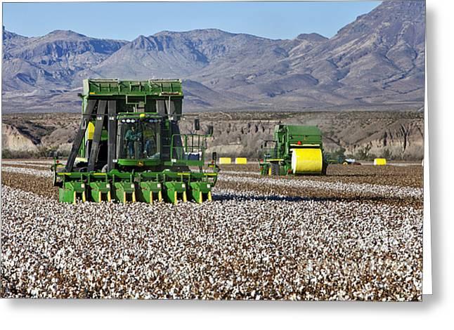 Cotton Pickers Greeting Cards - John Deere Cotton Pickers Harvesting Greeting Card by Inga Spence