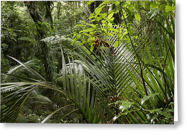 Raining Greeting Cards - Jungle greenery Greeting Card by Les Cunliffe
