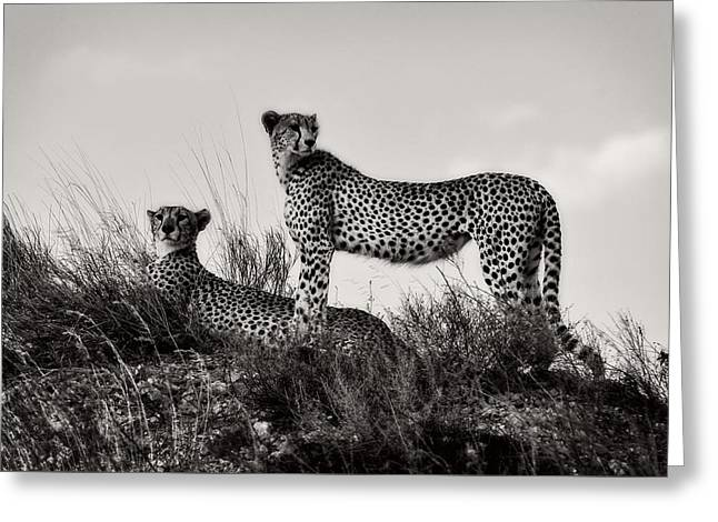 Black Cat Hills Greeting Cards - Lair Of The Cheetah Greeting Card by Eric Dietrich
