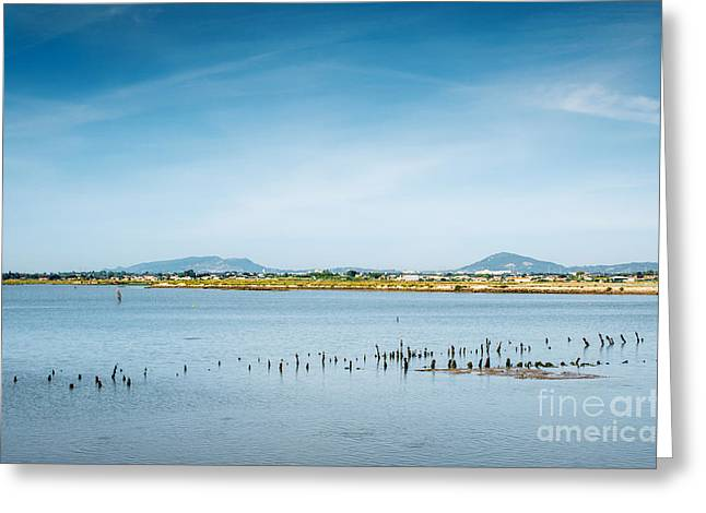Park Scene Greeting Cards - Lake and Poles Greeting Card by Carlos Caetano