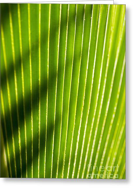 Moist Greeting Cards - Leaf Close-Up Greeting Card by Tomas del Amo - Printscapes