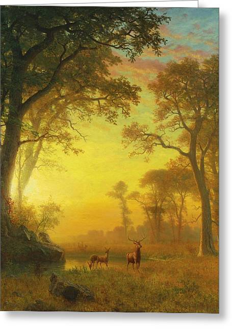 Sunset In The Forest Greeting Cards - Light  in  the  Forest Greeting Card by Celestial Images