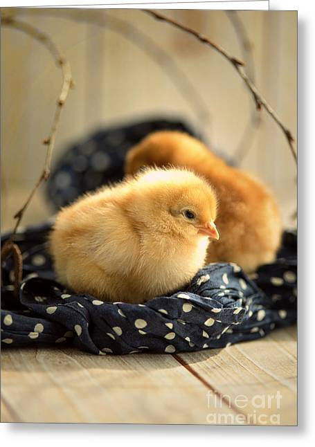 Cloth Greeting Cards - 2 Little Chicks Greeting Card by Tanja Riedel