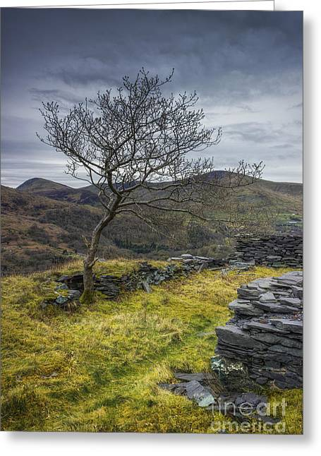 Peaceful Scenery Greeting Cards - Lone Tree Greeting Card by Ian Mitchell