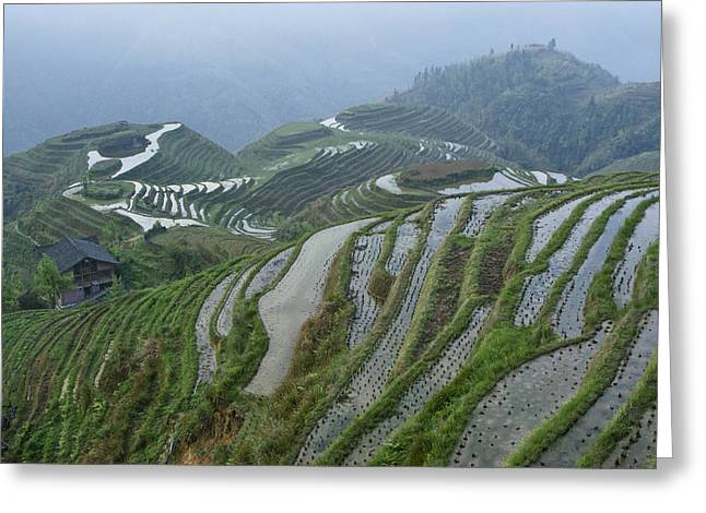 Landscap Greeting Cards - Longsheng Rice Terraces Greeting Card by Michele Burgess