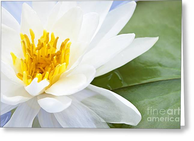 Wet Greeting Cards - Lotus flower Greeting Card by Elena Elisseeva