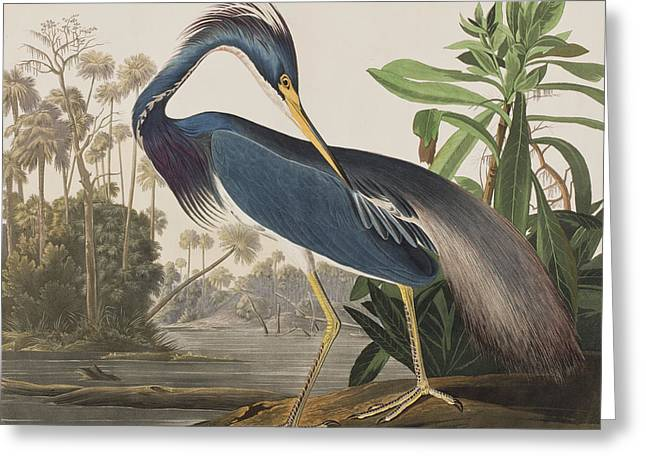 Louisiana Heron Greeting Cards - Louisiana Heron  Greeting Card by John James Audubon