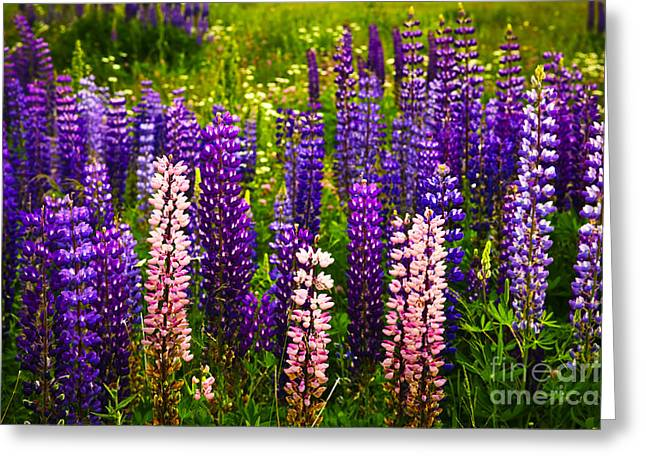 Lush Green Greeting Cards - Lupin flowers in Newfoundland Greeting Card by Elena Elisseeva