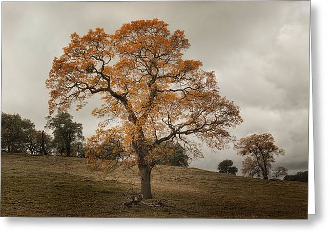 Mesa Greeting Cards - Mesa Grande Tree Greeting Card by Joseph Smith