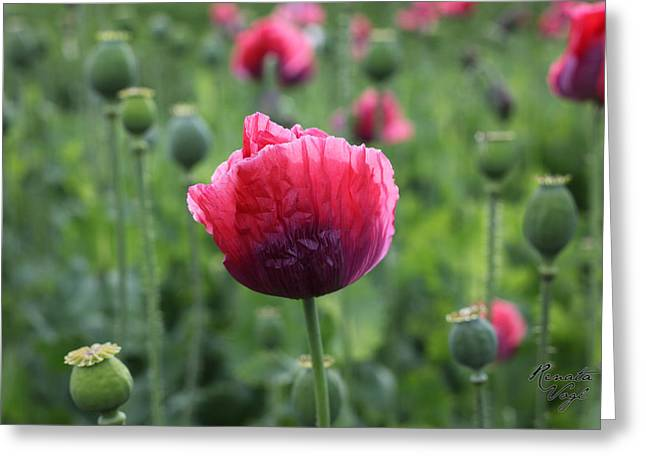 Photografie Greeting Cards - Mohnblumen Greeting Card by Renata Vogl