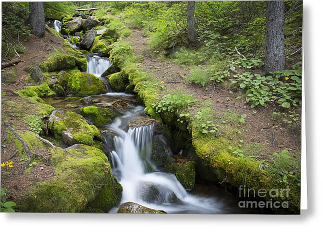 Alberta Water Falls Greeting Cards - Mountain Stream Greeting Card by Idaho Scenic Images Linda Lantzy