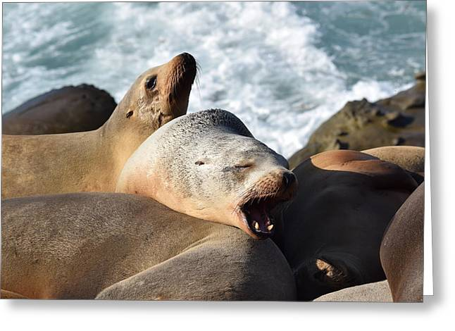 California Sea Lions Greeting Cards - Move Over Greeting Card by Steve Scheunemann