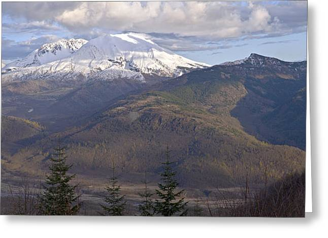 Tree Spirit Greeting Cards - Mt. St. Helens view at sunset. Greeting Card by Gino Rigucci