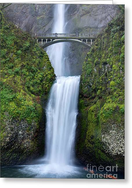 Green Foliage Photographs Greeting Cards - Multnomah Falls Waterfall Oregon Columbia River Gorge Greeting Card by Dustin K Ryan