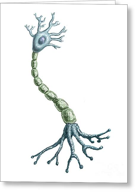 Transfer Greeting Cards - Neuron Cell Greeting Card by Spencer Sutton
