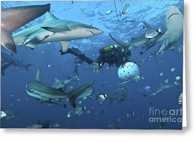 Ocean Predator Greeting Cards - Oceanic Blacktip Sharks Waiting Greeting Card by Mathieu Meur