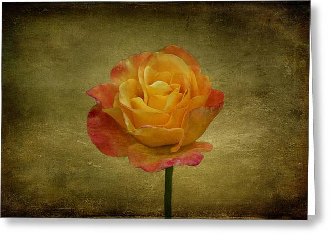 Indiana Roses Greeting Cards - Orange Rose Greeting Card by Sandy Keeton