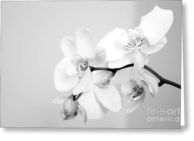 Orchids Digital Art Greeting Cards - Orchid Greeting Card by Amanda Barcon