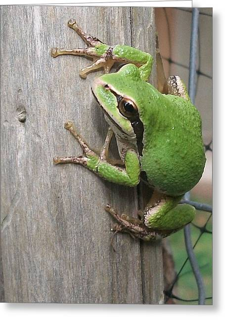Pacific Tree Frog Greeting Cards - Pacific tree frog Greeting Card by Shannon Gresham
