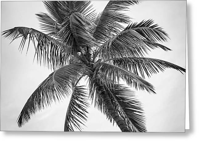 Black Top Greeting Cards - Palm tree Greeting Card by Elena Elisseeva