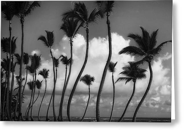 Recently Sold -  - Peaceful Scenery Greeting Cards - Palms Of Punta Cana Greeting Card by Abel Ojeda