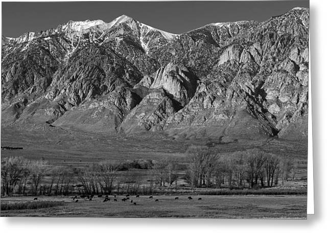 Grazing Snow Greeting Cards - Pastoral Scene In Mono County California Greeting Card by Mountain Dreams
