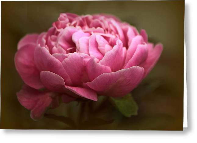 Pink Digital Greeting Cards - Peony Blossom Greeting Card by Jessica Jenney