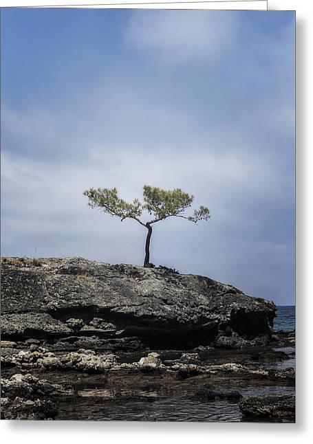 Pine Tree Greeting Card by Joana Kruse
