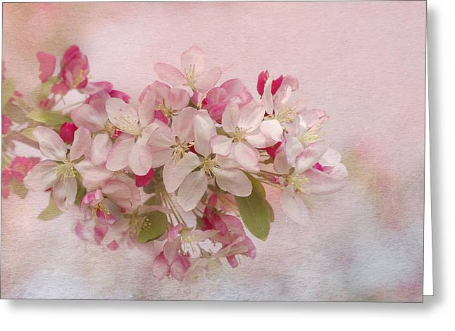 Flower Blossom Greeting Cards - Pink Blush Greeting Card by Kim Hojnacki
