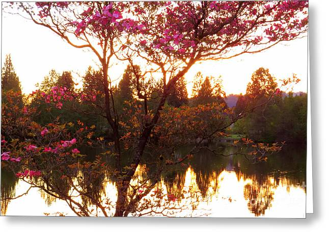 Dogwood Lake Greeting Cards - Pink dogwood Greeting Card by Frank Townsley