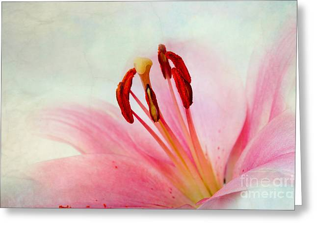 Pink Lily Greeting Card by Nailia Schwarz