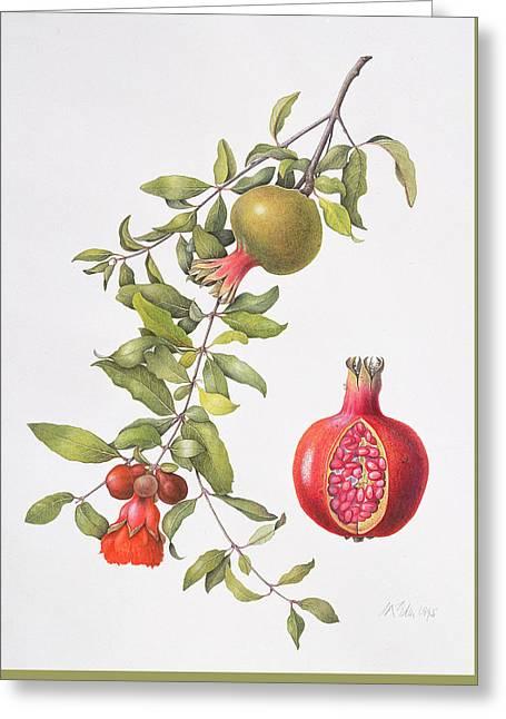 Pomegranate Greeting Card by Margaret Ann Eden
