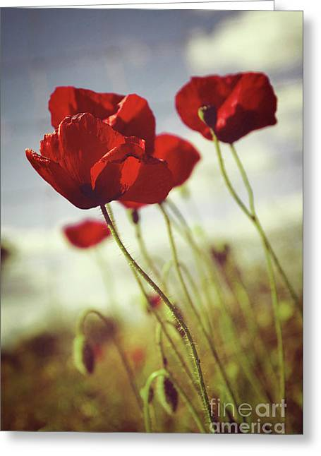 Poppies Greeting Card by Carlos Caetano