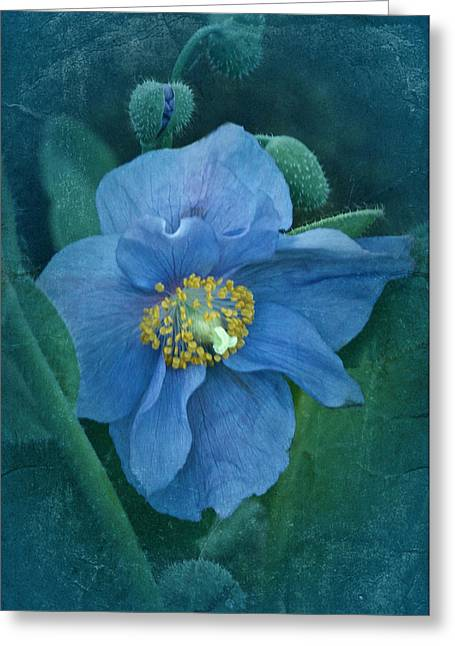 Enhanced Greeting Cards - Poppy Blue Greeting Card by Richard Cummings