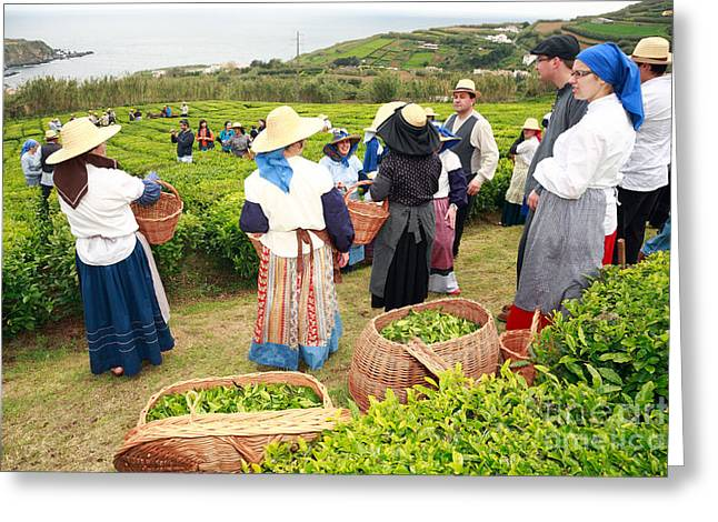 Azores Greeting Cards - Porto Formoso tea gardens Greeting Card by Gaspar Avila