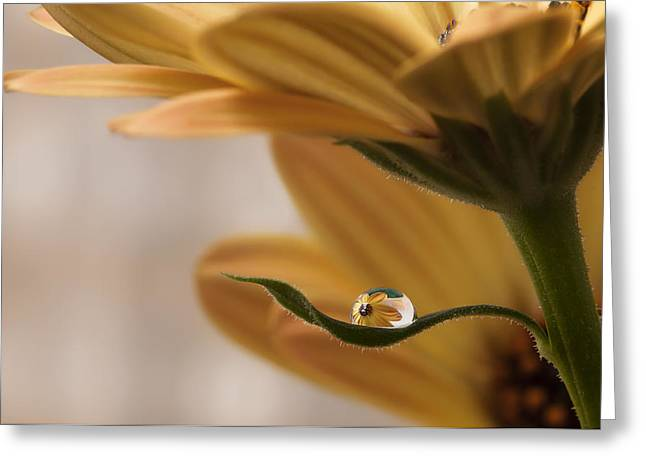 Water Drop Greeting Cards - Protected Greeting Card by Heidi Westum