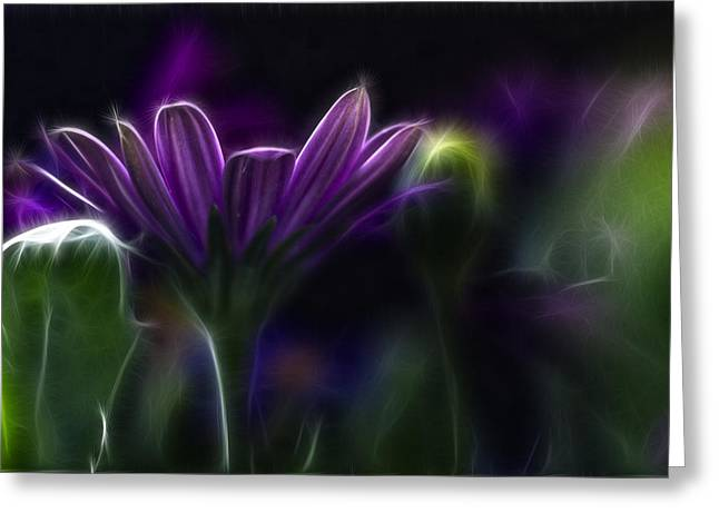 Abstract Nature Greeting Cards - Purple Daisy Greeting Card by Stylianos Kleanthous