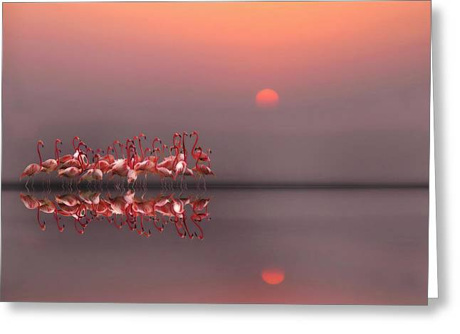 Mirror Reflection Greeting Cards - Purple Sunset Greeting Card by Anna Cseresnjes