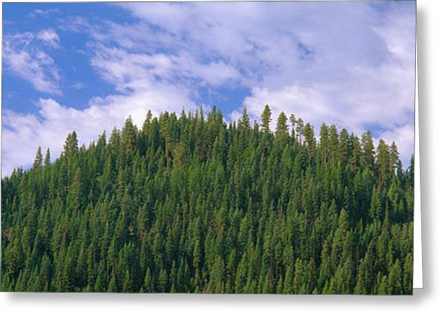 Pyramids Greeting Cards - Pyramid Of Pines, Smith Ferry, Idaho Greeting Card by Panoramic Images