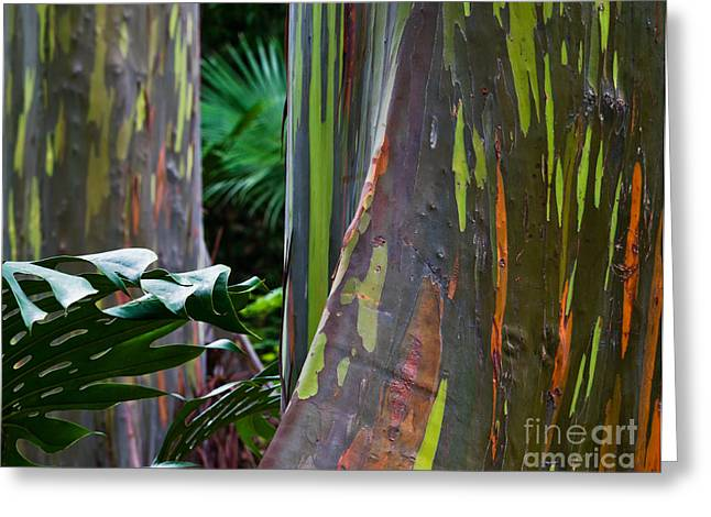 Nature Center Greeting Cards - Rainbow Eucalyptus Greeting Card by Frank Wicker