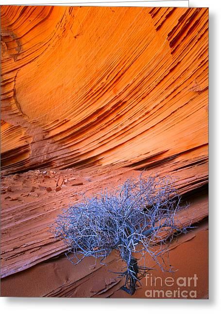 Rainbow Rocks Dead Bush #1 Greeting Card by Inge Johnsson