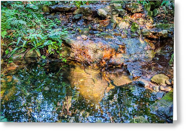 Babbling Brooks Greeting Cards - Reflections Greeting Card by Louis Ferreira
