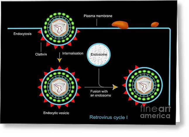Retrovirus Greeting Cards - Retrovirus Entering A Cell, Artwork Greeting Card by Francis Leroy, Biocosmos