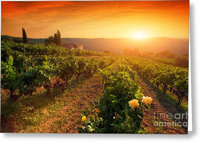 Ripe Wine Grapes On Vines In Tuscany, Italy Greeting Card by Michal Bednarek